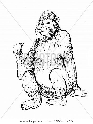 Monkey. Raster illustration. Hand drawn sketch of young orangutan smile, monkey is sitting on its ass and finger is pointing back. Goodbye 2016. Vintage engraving style.