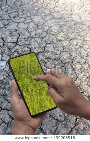 Smartphone in hands display show green rice field on a dry and cracked earth background environmental and technological concept