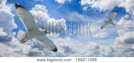 Seagulls on a cloudy blue sky background