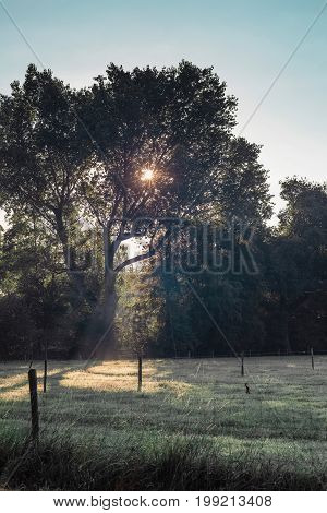 Morning sun through leaves of a tree.