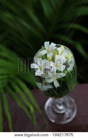 Little white flowers Orange Jessamine in glass vase.
