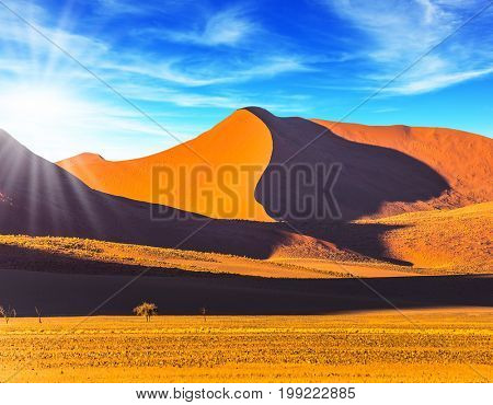Orange, purple and yellow dunes and small lonely tree. Hot sun of the Namib desert. Namibia, South Africa, sunset. The concept of extreme and exotic tourism