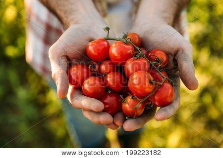 Farmer Holding Tomatoes