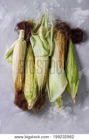 Young raw uncooked corn cobs in leaves. Top view over light gray concrete texture background.