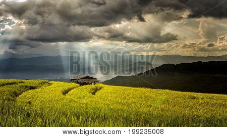 Hut in terrace rice field with storm clouds and sunbeam