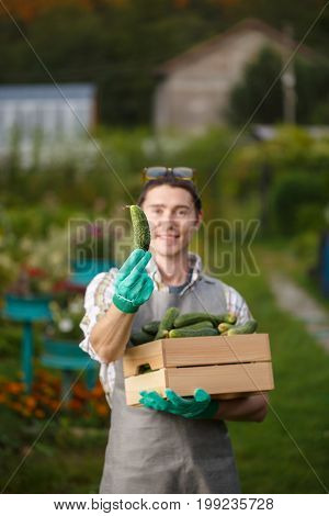 Guy in gloves with box of cucumbers in garden at afternoon