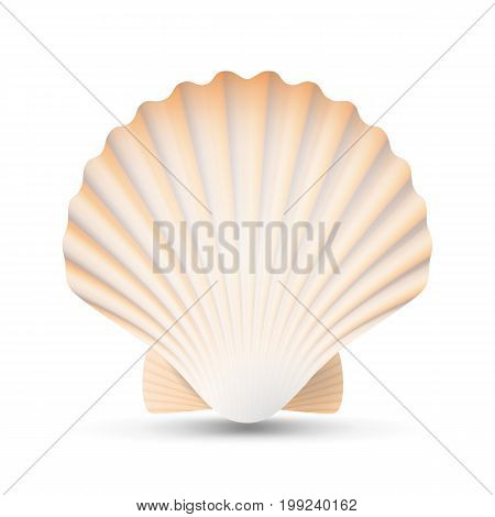 Scallop Seashell Vector. Ocean Mollusk Sea Shell Close Up. Isolated. Illustration