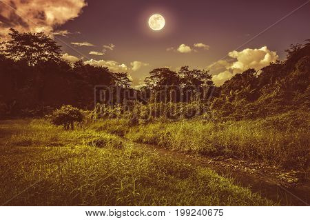 Bright Full Moon Above Wilderness Area In Forest, Serenity Nature Background. Sepia Tone.