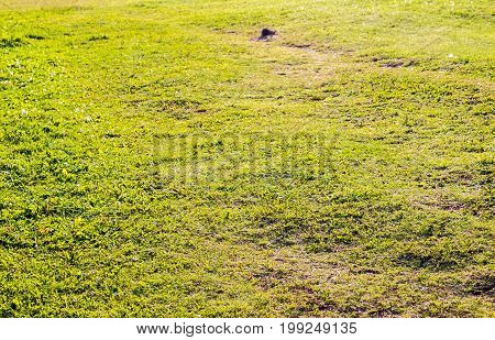 Grass Field Green Grass Background With A Footpath