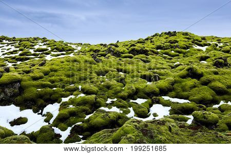 Eldhraun lava fields Covered With Moss Southern of Iceland