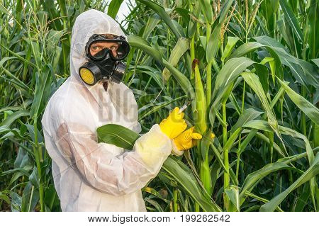 Gmo Scientist In Coveralls Genetically Modifying Corn (maize)