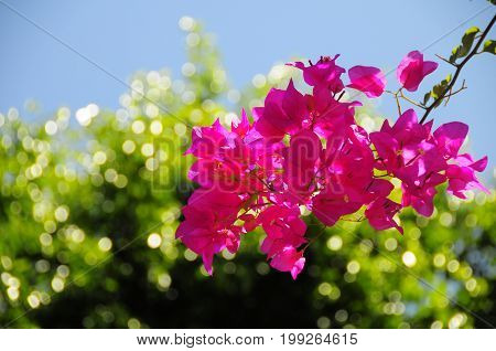 Pinky flowers in the garden with bokeh background