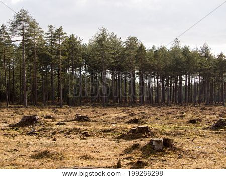 Deforestation area in the new forest national park