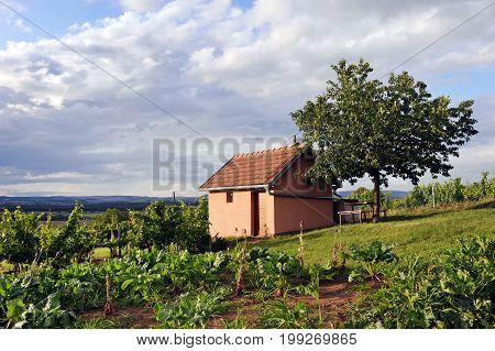 Vineyard in southern Moravia, Czech republic, Europe