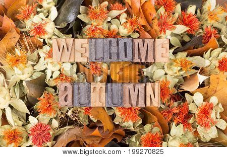 Welcome autumn wood text on a colorful autumn flower background