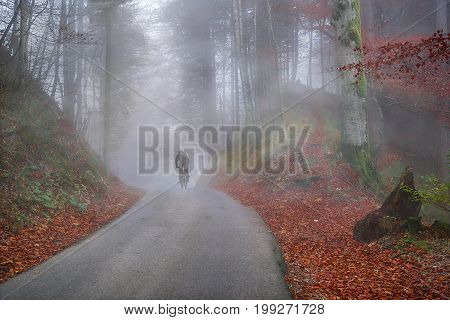 Fall landscape with a colorful forest and its carpet of autumn leaves surrounded by mist and people crossing it by bike.