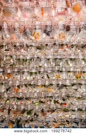 Pet Fish On Sale At Goldfish Market In Hong Kong