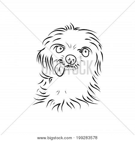 Shaggy puppy head  on white background, vector