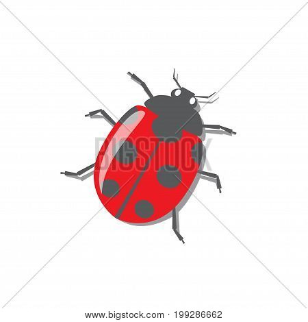 Red seven spotted ladybug with shadow vector illustration