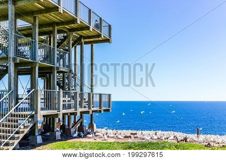 Perce Canada - June 6 2017: Wooden viewing platform building overlooking Gannet birds colony nesting on cliff on Bonaventure Island in Quebec Canada by Gaspesie Gaspe region