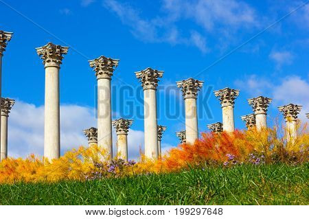 National Capitol Columns surrounded by autumn flowers. The Capitol Columns designed as Corinthian columns in the Ellipse Meadow at the National Arboretum Washington DC.