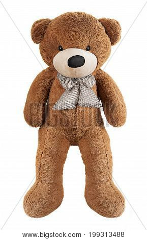 Big brown toy bear with bow isolated on white background