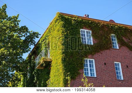 Ivy greenery on the corner of a brick wall, building in Helsinki, Finland
