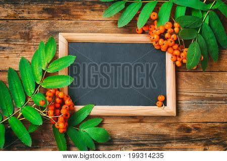 Bunch of ashberry branch blackboard in frame on wooden table autumn composition space for text rustic style