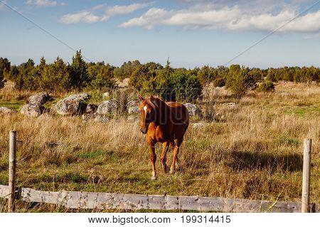 Beautiful brown hourse in field near a fence