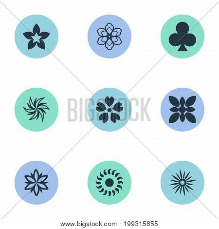 Elements Morning Glory, Gerberas, Laurel And Other Synonyms Cypress, Jonquil And Leaf.  Vector Illustration Set Of Simple Flower Icons.