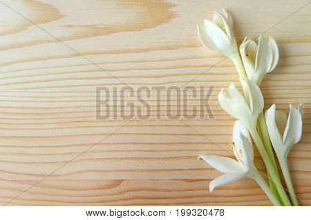 Bunch of Pure White Blooming Millingtonia Flowers on Wooden Table, with Free Space for Design and Text