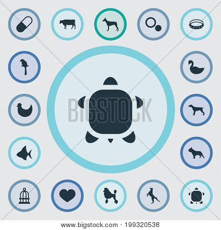 Elements Belt, Tortoise, Lake Bird And Other Synonyms Hen, Symbol And Swan.  Vector Illustration Set Of Simple Fauna Icons.