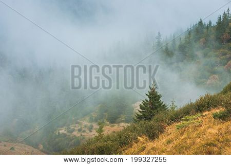 View Of A Fir Trees Forest