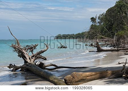 Dead trees on the beach at Punta Manzanillo, Costa Rica