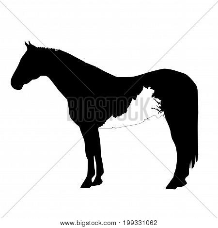 Vector Horse Silhouette With Virginia Boundary Patch Illustration