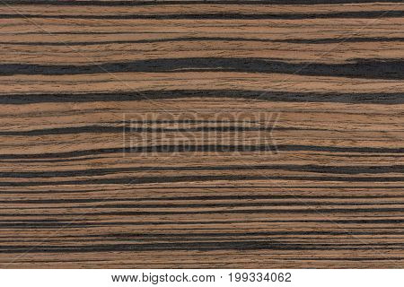 Real ebony wood texture for high impact natural feeling. Extremely high resolution photo.