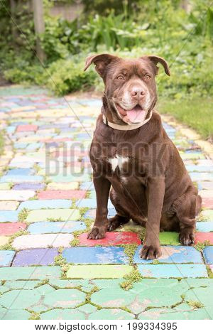 A brown mixed breed dog sits on a colorful brick walk in a garden.