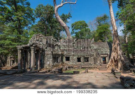 Big tree on the ancient Prasat Ta Phrom Angkor Wat Cambodia