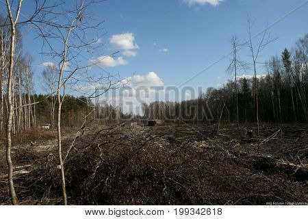 Khimki, Moscow region, Russia - April 23, 2011. Cut down trees in the Khimki forest. Defenders of the Khimki forest opposes the felling of trees.