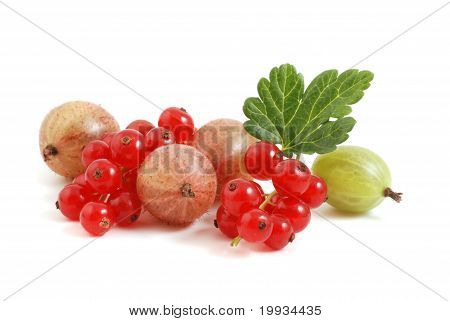 Currant and gooseberry