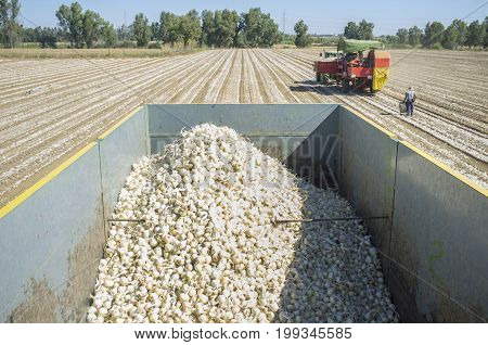 Tractor pulling an onion harvester. View from trailer. Badajoz Spain