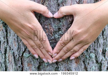 Female hands making heart shape on the background of a tree trunk
