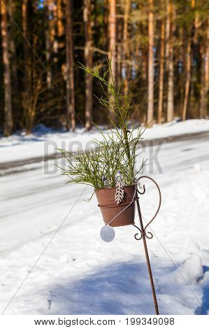 Pot with blueberry greenery near road at winter. Sign of turn to private house. Estonia