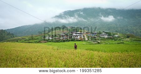 Paddy Rice Field At Sopsokha Village In Bhutan