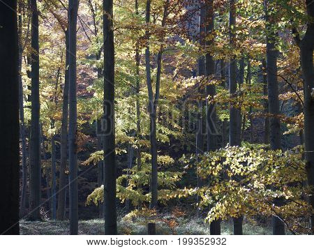 Scenic view of colorful trees in forest in Beskid Mountains landscape near city of BIELSKO-BIALA in POLAND in 2016 warm sunny autumn day, SILESIA PROVINCE, Europe on October.