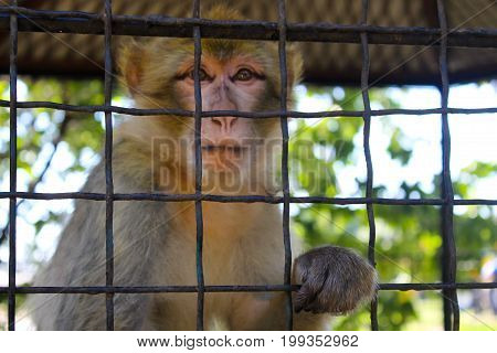 Monkey in a cage in a zoo