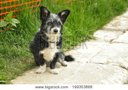 The dog (lat. Canis lupus familiaris) a pet, one of the most common (along with a cat)