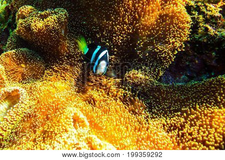 Coral reefs in the Komodo National Park. Under the water.