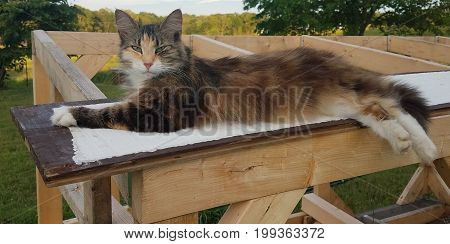 Barn cat laying on board with disdainful look