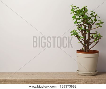 Wooden Shelf With Plant